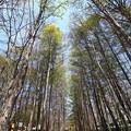 写真: 散?林間