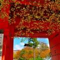 写真: 山門に煌めく寺の妙