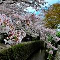 Photos: 小川の上の優雅さよ