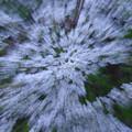 写真: 風に揺れる「露光間ズーム」