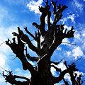 写真: 樹木