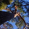 Photos: 樹を見上げて