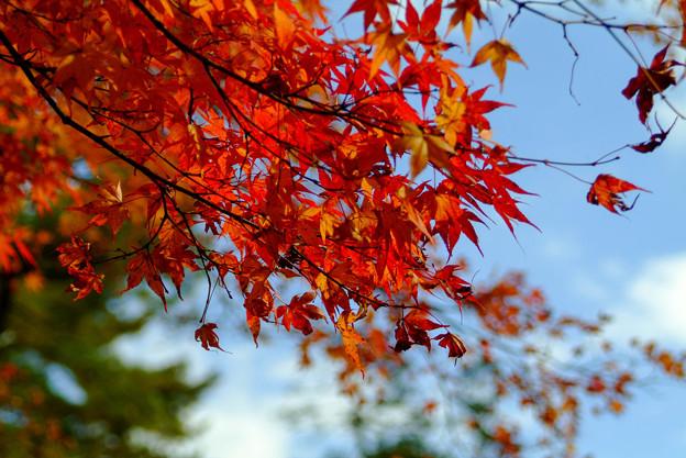 南禅寺の紅葉2