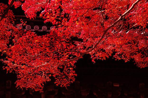 南禅寺の紅葉4