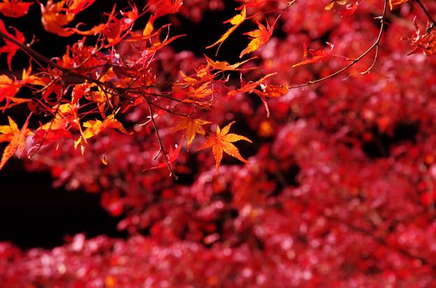 南禅寺の紅葉6
