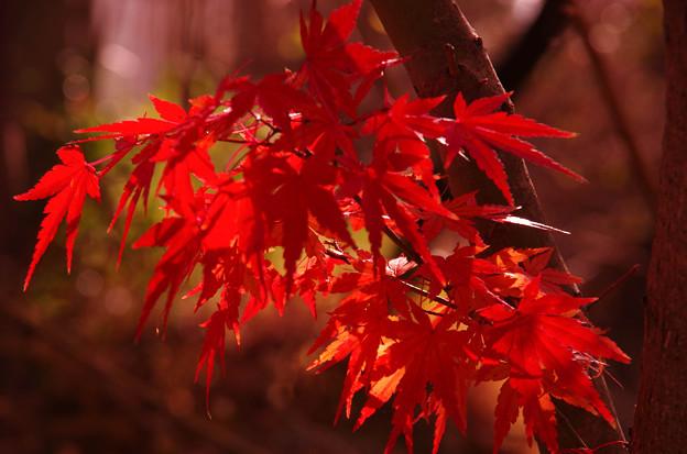 南禅寺の紅葉10