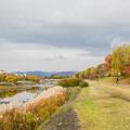 写真: 京都鴨川の秋
