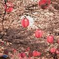 桜のお祭り