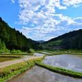 Photos: 四谷千枚棚田の一景