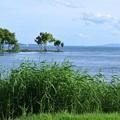 琵琶湖 湖畔