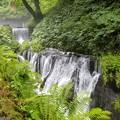 写真: 軽井沢の白糸の滝にて