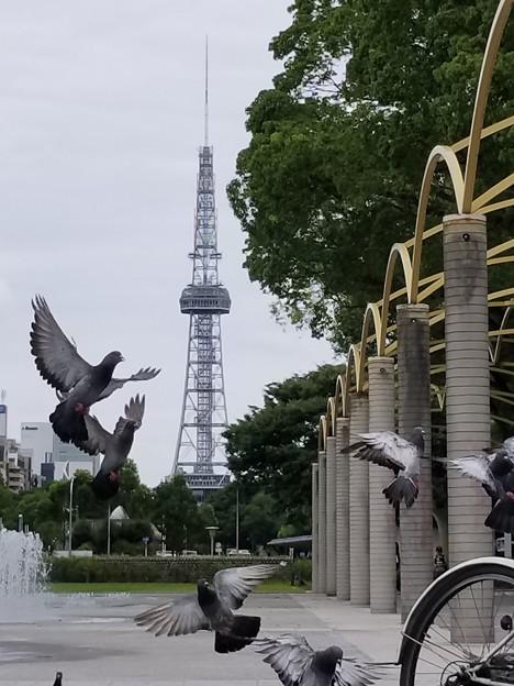 Photos: 鳩達のロンド