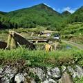 棚田の風景 (稲の天日干し)