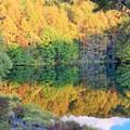 写真: 御射鹿池の紅葉