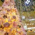 クリスマスツリーに、つられて