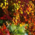 写真: 紅葉