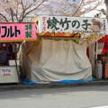 造幣局 桜の通り抜け 2017 (1)