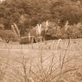 秋の風景 シャハト35mm