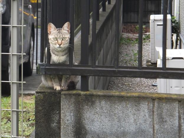 遊歩道横の家の猫