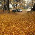 キャンプ場の落ち葉