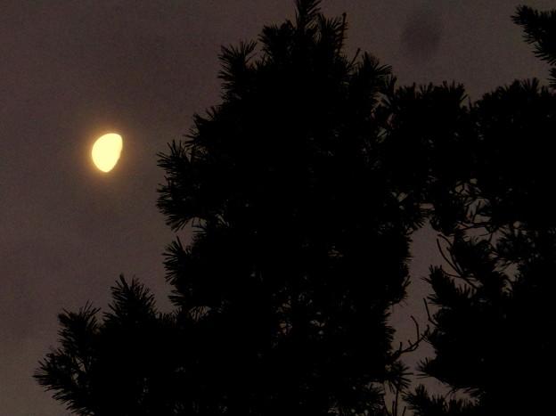 本栖湖の月