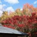 森林公園紅葉