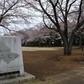 桜_公園 D3334