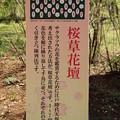 桜草花壇の説明 D3475