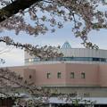 桜_市役所 D3399
