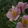 花壇の花 F0297