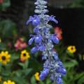 花壇の花 F0299
