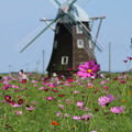 写真: 風車と_公園 D5264