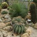サボテン_植物園 D5333