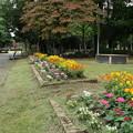 花壇_公園 D5388