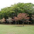 洞峰公園 D5394