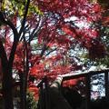 紅葉_天神山 F0796