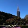 ドコモタワーと菊 D5789