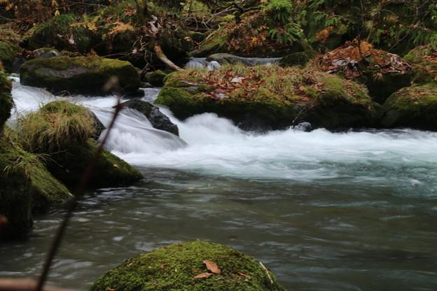 写真: 奥入瀬渓流 D5756