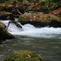 奥入瀬渓流 D5756