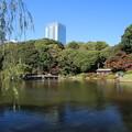 写真: 新宿御苑 D5799