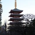 写真: 五重塔_浅草寺 D6180