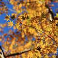 写真: 秋色金?