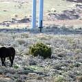 写真: 100年の歴史ある野生馬 (2)