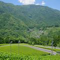 布施坂茶畑