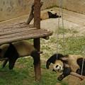 くつろぎパンダ