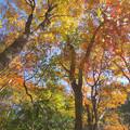 Photos: 秋盛り