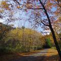稲叢山への道