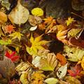 秋の終業式
