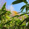 笹の窓から秋空