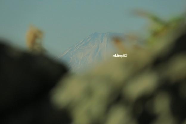 初冬景荒崎富士